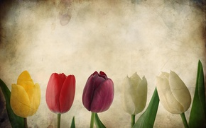 Picture flowers, paper, Tulip, tulips, texture, Grunge