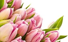 Picture leaves, flowers, beauty, bouquet, petals, tulips, pink, pink, flowers, beauty, bouquet, bright, Tulips