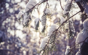 Picture winter, forest, macro, snow, trees, landscape, snowflakes, branches, branch, the snow, pine, the snow, pine