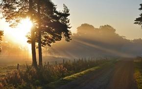 Picture morning, landscape, light, road