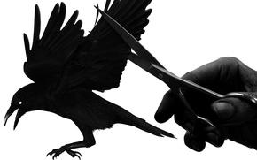 Picture freedom, bird, hand, wings, Raven, scissors