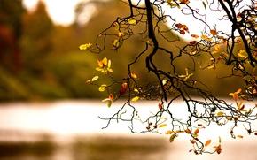 Wallpaper foliage, branch, autumn, nature