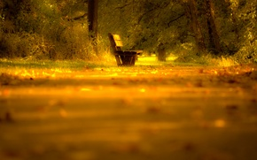 Picture road, autumn, leaves, light, trees, nature, mood, Bench, shop