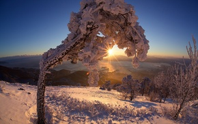 Picture winter, the sun, rays, mountains, tree, Snow