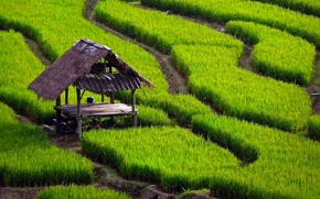 Picture grass, table, track, canopy, rice fields