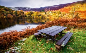 Picture table, trees, shore, leaves, autumn, benches, grass, river, landscape