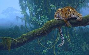 Picture tropics, tree, predator, Jaguar