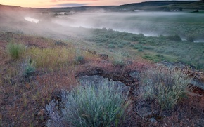 Wallpaper fog, river, grass, Morning, field
