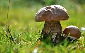 Wallpaper leg, macro, bokeh, chlpka, grass, mushrooms, mushroom