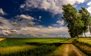 Picture road, field, summer, nature