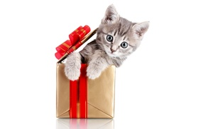 Picture cat, animals, red, kitty, grey, holiday, box, gift, new year, white background, sitting, bow, Wallpaper …