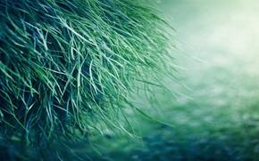 Picture summer, grass, drops, nature, Rosa, mood
