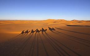 Picture desert, shadows, caravan