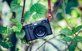 Picture greens, background, camera