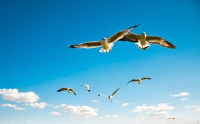 Picture The SKY, WINGS, BIRDS, The SCOPE, POLITSY, SEAGULLS, 'BATRO
