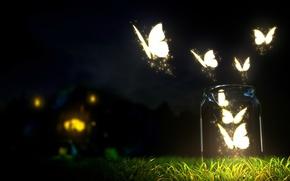 Picture grass, Night, lights, Bank, moths