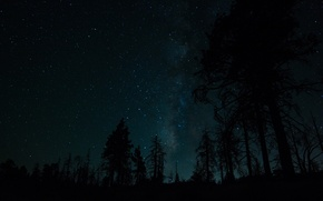 Picture forest, the sky, trees, the milky way