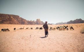 Picture sand, summer, the sky, the sun, hills, desert, shadow, dry, shepherd, the herd, goats