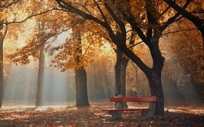 Picture autumn, fog, Park, morning