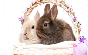 Wallpaper rabbits, basket, holiday, Easter, Easter