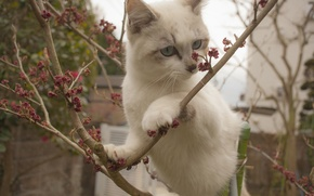 Picture cat, cat, branches, kitty, on the tree