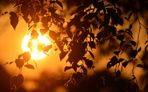 Picture macro, light, sunset, branches