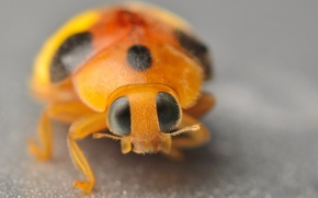 Picture eyes, macro, ladybug, antennae