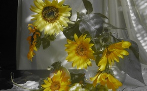 Picture sunflowers, Apple, bouquet, grapes, still life