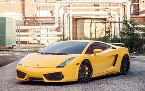 Picture Lamborghini, Gallardo, Lamborghini, yellow, Gallardo
