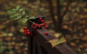 Picture leaves, bench, wallpaper, widescreen, wallpapers, Rowan, beautiful Wallpaper, widescreen