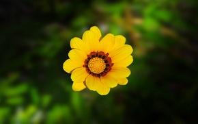 Wallpaper blur, yellow, petals, greens, flower
