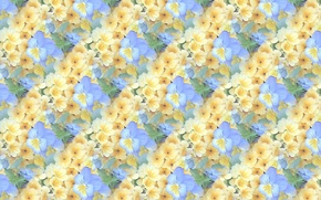 Picture flowers, background, texture, Pansy, viola
