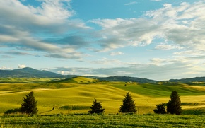Picture greens, the sky, grass, clouds, trees, hills, field, space, Italy, Tuscany