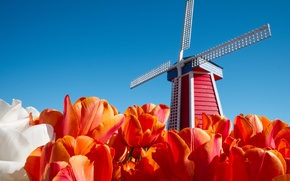 Picture the sky, flowers, tulips, Netherlands, windmill