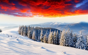 Picture winter, forest, clouds, snow, mountains, dawn, glow, tree