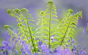 Picture leaves, flowers, plants, stem