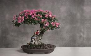 Wallpaper tree, bonsai, boys, climbing