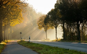 Picture road, the sun, light, trees, morning