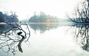 Picture landscape, fog, lake, morning