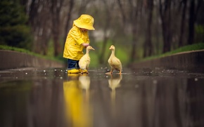 Picture birds, reflection, child, the goslings, yellow raincoat