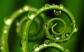 Picture plant, sheet, spiral, drops
