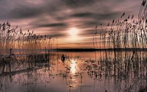 Picture sunset, reed, Bay, Sweden, Sweden