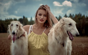 Picture field, forest, dogs, girl, two, makeup, dress, hairstyle, beauty, white, bokeh, greyhounds, Rus, Russian hunting …