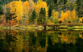 Picture autumn, forest, trees, lake, reflection, slope