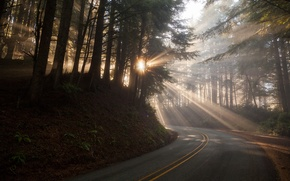 Picture fog, morning, autumn, road