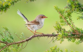 Wallpaper branch, bird, baby, malur