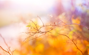 Picture autumn, branch, Abstract, Autumn, leaves, Colors