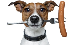 Picture humor, white background, plug, sausage, Jack Russell Terrier