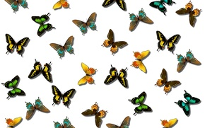 Picture pattern, butterfly, paint, color, wings, moth