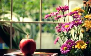 Picture flowers, yellow, background, pink, red, widescreen, Wallpaper, mood, Apple, blur, window, book, wallpaper, flowers, widescreen, …